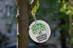 Шесть миллионов деревьев высадили в столице за последние восемь лет. Фото: Анна Быкова