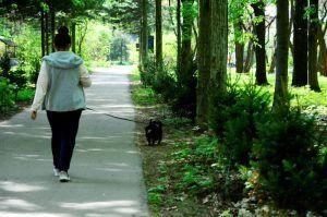 Соблюдение правил выгула собак проверят в Молодежной палате района. Фото: Анна Быкова