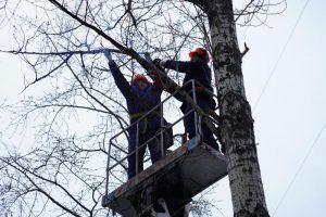 Кронирование деревьев в районе проведут сотрудники «Жилищника». Фото: Денис Кондратьев