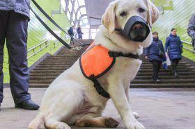 Москвичам посоветовали соблюдать правила гигиены после контакта с животными в условиях пандемии. Фото: сайт мэра Москвы