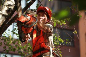 Работы по обрезке деревьев провели в районе. Фото: Наталия Нечаева, «Вечерняя Москва»