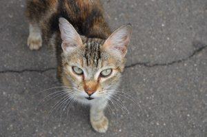 Конкурс ко Дню кошек запустили сотрудники центра «Замоскворечье». Фото: Анна Быкова