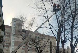 Обрезку деревьев начали в районе. Фото предоставили сотрудники учреждения